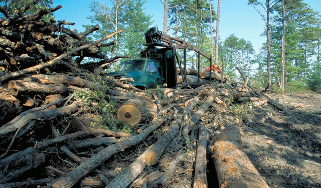 Wycinka drzew w Polsce bez zezwolenia